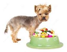 Doping, ultima frontiera: pillole per cani per gonfiare i muscoli