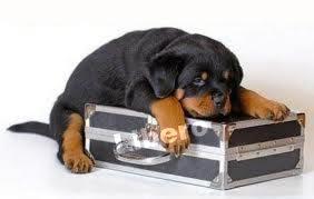 In vacanza col cane? Statistiche chiare: cresce la voglia di mettere il pet in valigia