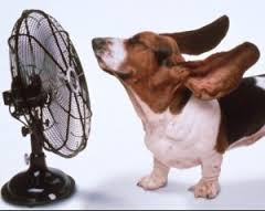 ventilatore caldo