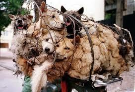 """Passo avanti di civiltà in Corea del Sud: Seongnam vieta la macellazione di cani. Enpa: """"Adesso in Asia puntiamo all'effetto domino, anche per Yulin"""""""