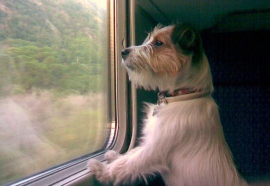 Fido in vacanza su rotaia: d'agosto con Trenitalia cani a bordo con 5 euro