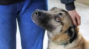 Una app per favorire le adozioni e ritrovare il cane smarrito: ci ha pensato la Usl 6 di Padova