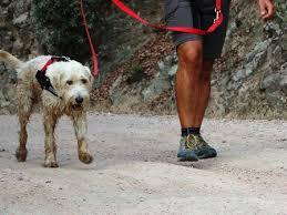 Passeggiare a sei zampe: per passione o in gara! Alla scoperta del dog trekking