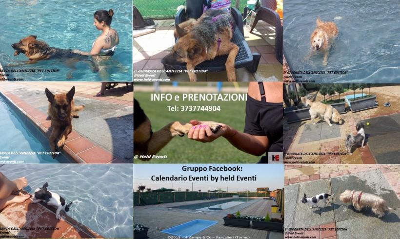 Tra piscina, giochi e relax a Pancalieri si celebra la II Giornata dell'Amicizia Pet Edition