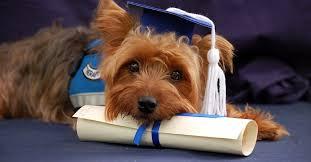 Laurearsi in… cane: nelle università italiane tanti corsi a misura di zampa