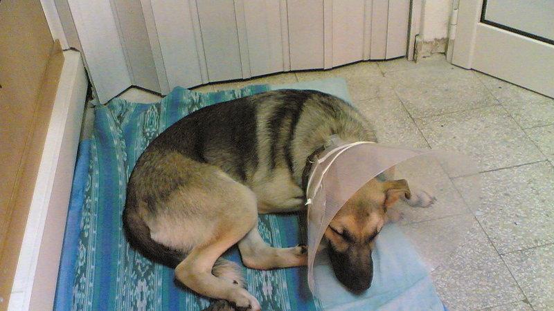 Una mutua nazionale per la sanità veterinaria di cani con microchip: qualazampa.news firma la PET…izione