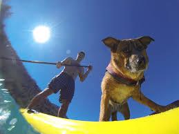 Con il sup(er) cane a passeggio a pelo d'acqua