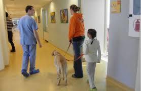 A Genova cani fisioterapisti in corsia: sperimentazione d'autunno