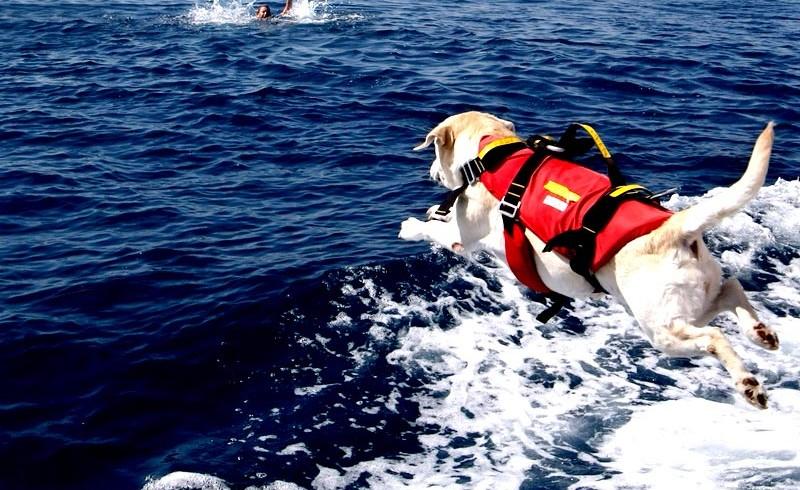 Noi in vacanza, i cani bagnino al lavoro per proteggerci. Ecco il bilancio Sics