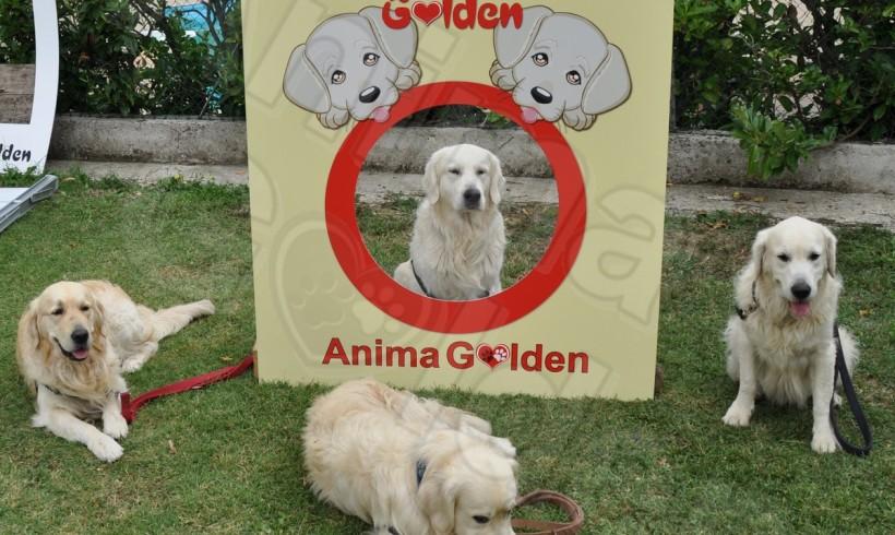 La carica dei Golden invade l'appennino bolognese: arriva il IV Raduno nazionale Anima Golden
