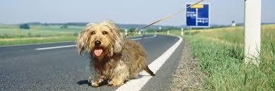 Estate 2016 con meno cani abbandonati: monitoraggio Aidaa su 100 canili italiani