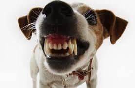 """Sui cani aggressivi nuova proroga dell'ordinanza 2013. E Lav: """"Perché non renderla legge?"""""""