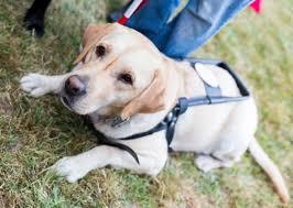 Multato l'albergatore di Rimini che aveva rifiutato un non vedente per via del cane guida: 883 euro di sanzione