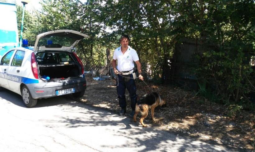 Pastore tedesco rapito a maggio ritrovato e riconsegnato alla famiglia grazie al microchip