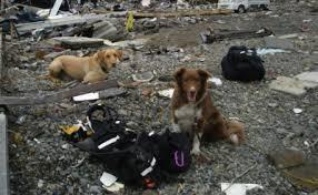 Terremoto, dal canile di Rovereto e Arcadia onlus 1.230 quintali di cibo per animali nelle zone del sisma