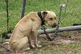 Regione Marche, dopo le polemiche apre a passo indietro su uso catene per cani