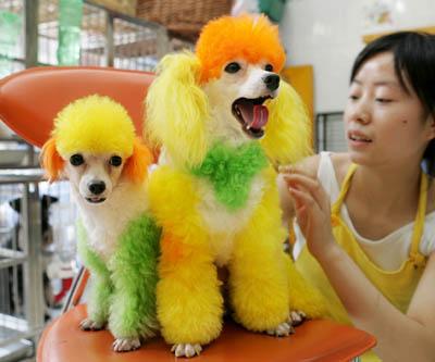 Cani e arte sì, ma non sulla loro pelliccia. Colorarli può essere reato