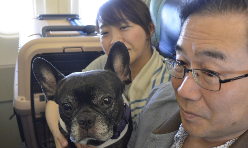 C'era un aereo con 44 cani: esperimento di volo riuscito in Giappone. Presto i pet ammessi in cabina