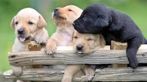 A La Spezia l'affido del cane Cesare va davanti al giudice