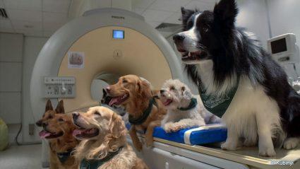 Parole e intonazioni: i cani ci capiscono. Ecco cosa rivela uno studio ungherese