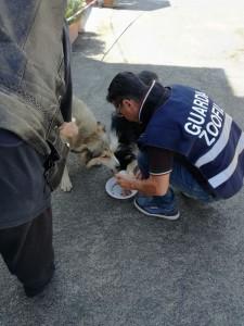 """Terremoto, LNDC: """"Pronti per una Protezione Civile animale. Ora mettere in sicurezza persone e animali"""""""