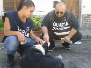 Lndc in aiuto dei cani durante il sisma 2016