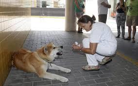 Cuore di Maya: aspetta la sua amica umana per sei giorni fuori dall'ospedale