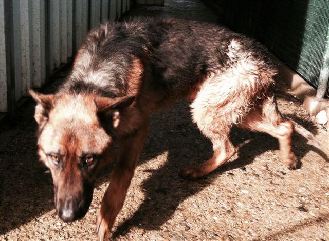 Tenere il cane solo in giardino senza averne cura è reato di abbandono. Sentenza in Cassazione