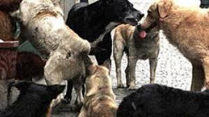"""Partanna, idea del sindaco per arginare il randagismo: """"Guai a chi nutre i cani vaganti"""". Lndc: """"Riveda l'ordinanza"""""""