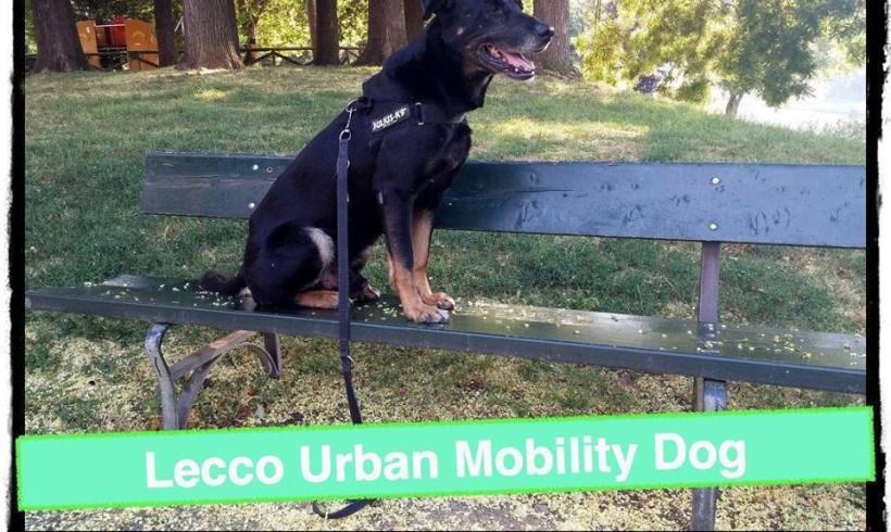 """Passeggiatona a 6 zampe con la """"Urban Mobility Dog"""" di Lie to Dog"""
