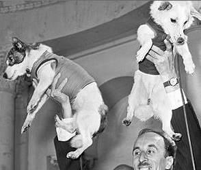 Belka e Strelka, le due cagnoline rientrate sane e salve dallo spazio 50 anni dopo la morte di Laika, vengono esibite come trofei
