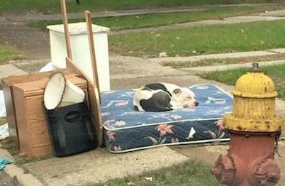 Traslocano e abbandonano il cane tra i rifiuti. Boo li ha attesi per giorni, poi si è lasciato soccorrere