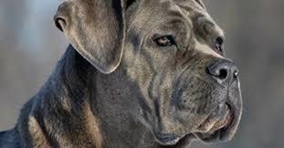 Pescara: bimbo sfugge al controllo dei genitori. Il cane, legato a catena, lo morde uccidendolo