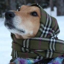 Freddo freddissimo, come aiutare i pet? Il decalogo Lndc