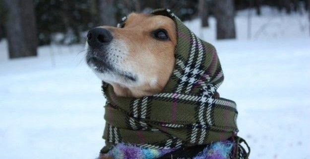 E' arrivato il freddo: decalogo LNDC per proteggere i pet