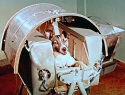 Il 3 novembre del 1957 la cagnolina Laika moriva sullo Sputnik