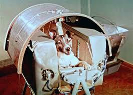 """Sessant'anni fa moriva Laika nello spazio, Rocchi (Enpa): """"3 novembre sia giornata per tutti gli animali uccisi dall'uomo"""""""