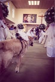 Fido va a nozze: il paggetto con la coda diventa un business