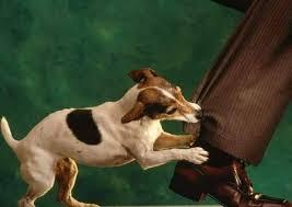 Morsicature di cani e randagismo: interrogazione M5S alla Camera. Prima firmataria la deputata che morse un commesso