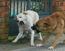 Cane libero per il paese morde un cagnolino e una donna: proprietario denunciato per omessa custodia