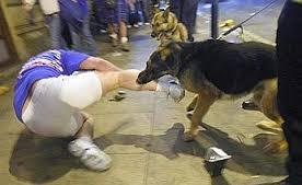 Sei cani fuggono dal loro recinto e aggrediscono un giovane: 20 giorni di prognosi