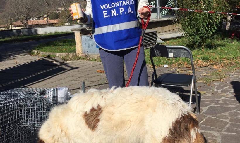 """Terremoto, attivo a Norcia il punto veterinario avanzato di Enpa. Nuovo appello alle strutture di accoglienza: """"Accettate i pet"""""""