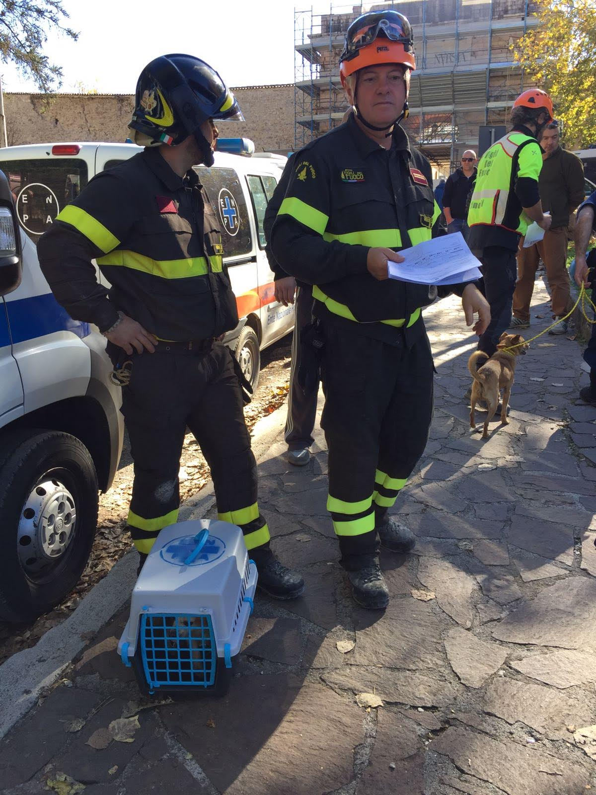 Terremoto attivo a norcia il punto veterinario avanzato for Veterinario di punto di cabina