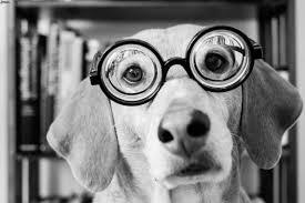 Occhiali e lenti a contatto contro le patologie oculari del cane: così l'oftalmologia veterinaria guarda avanti