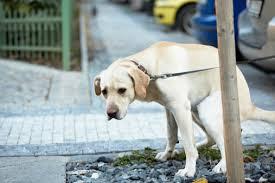 A Firenze via ai controlli su raccolta escrementi e detenzione del cane: 8 multe su 191 controlli nella prima mattinata