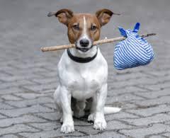 Accogliere in casa un cane trovato per strada non sempre è lecito: ecco perché
