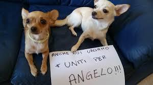 """Cane Angelo, Enpa: """"Vigilare sull'attività di volontariato richiesta ai quattro"""""""