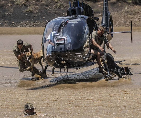 Quando Fido difende Dumbo: contro il bracconaggio il Sudafrica schiera i cani paracadutisti
