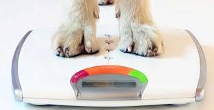 Diabete, conoscere per prevenire vale anche per i nostri pet: un mese intero di iniziative con veterinari ed esperti (II parte)