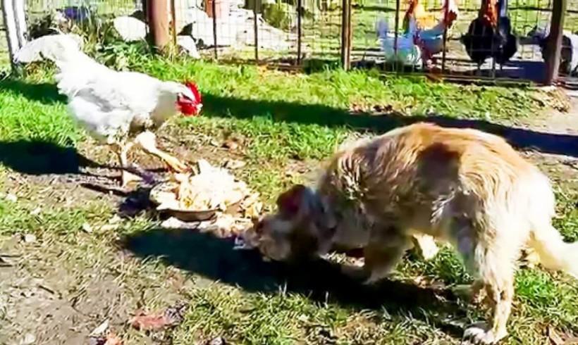 Spara ai cani che gli mangiano le galline e ne uccide uno: 45enne denunciato a Velletri